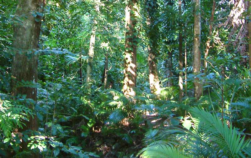 Orld heritage listed in 1988 the daintree rainforest with an area